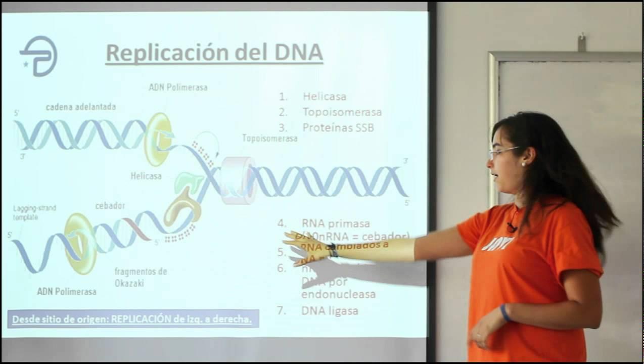 Biologia Me Organización Estructura Y Actividad Celular Genoma Y Genes
