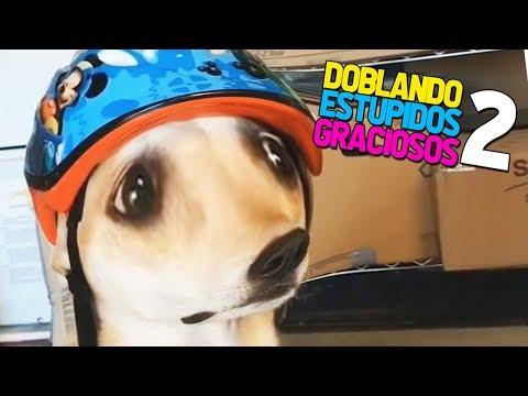 DOBLANDO VIDEOS ESTUPIDOS Y GRACIOSOS #2