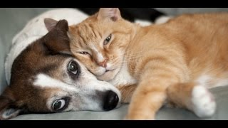 funny animals a funny animal videos compilation 2015 funny cat videos december 2015