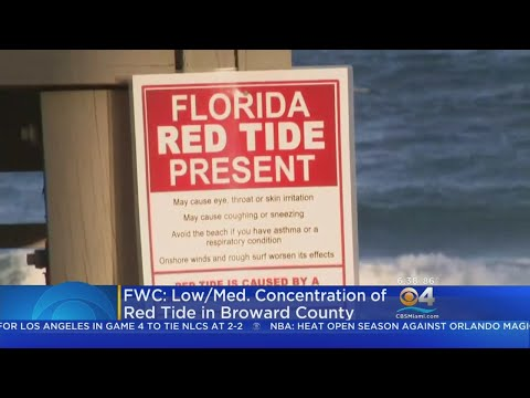 Red Tide Warning Signs Posted On Deerfield Beach