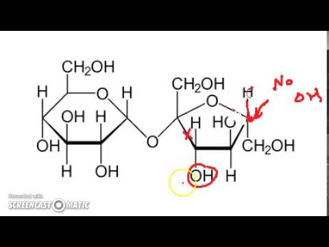 Why Lactose Is a Reducing Sugar but Sucrose Is Not