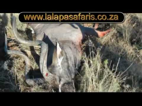 Eastern Cape Kudu Hunt With Ray Kemp Lalapa Safaris South Africa Youtube