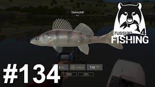 Auf Zander und Steinschill an der Sura 🐋 | Russian Fishing 4 #134 | Deutsch | UwF