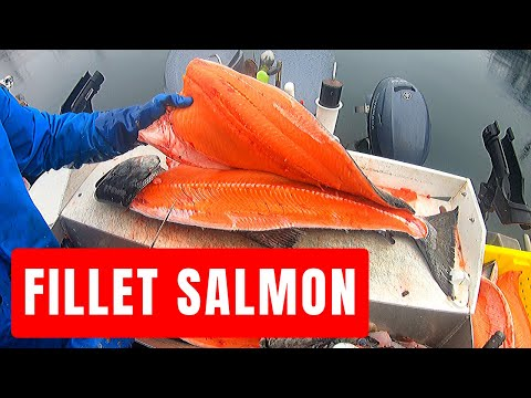 How to Fillet Salmon, Monster Kings, Coho and Pinks!