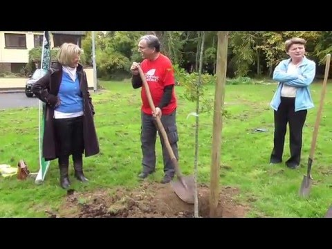 Plant-a-Tree Thomas Peters in Shankill, Dublin Visit 18th Oct 2015