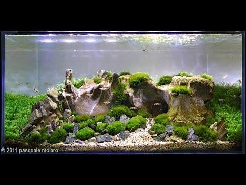 Egy kis kedvcsináló - Legszebb növényes akváriumok (akvakertészet)