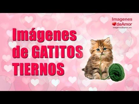 8 Im�genes de gatitos tiernos con lindas frases de amor