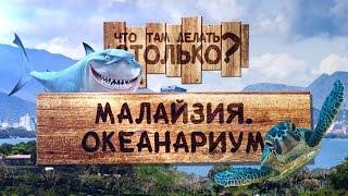 Океанариум / аквариум Куала-Лумпур Малайзия ЧТДС №19(Видео про океанариум, Куала-Лумпур, Малайзия. В океанариуме расположен огромный аквариум в котором сделан..., 2014-11-07T11:36:22.000Z)