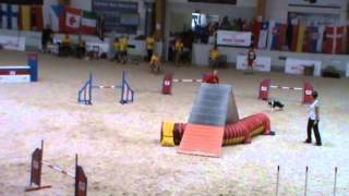 Caly Agility EO 2013 Finale Large, DIS,