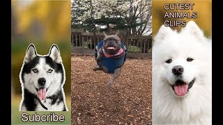 CUTEST ANIMALS IN THE WORLD #21 - Funny and cute pets videos moment