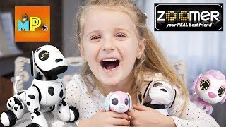 Zoomed Dog  нашел младшего брата Zupps! Zoomer Dog and Zupps together