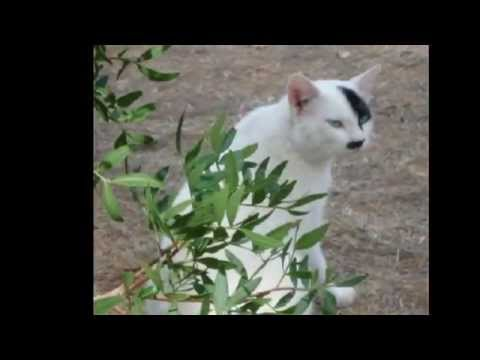 Cats That Look Like Hitler 2 Youtube