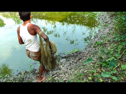 Net Fishing | Catching Lot Of Fish With Cast Net | Net Fishing in the village (Part-112)