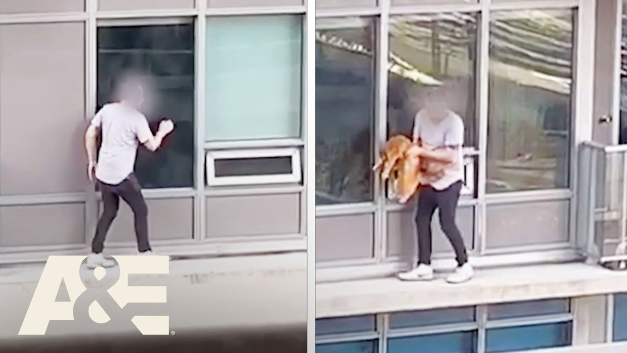 Man RISKS HIS LIFE to Rescue Cat From 6th Floor Balcony | Neighborhood Wars | A&E #shorts