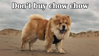 Chow Chow Dog Breed 9 Facts To Know Before Buying