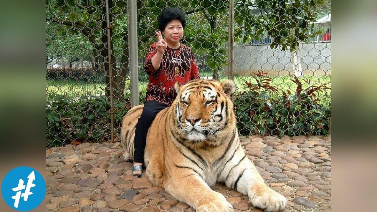 101+ Gambar Hewan Binatang Jinak HD