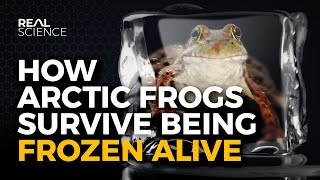 How Arctic Frogs Survive Being Frozen Alive