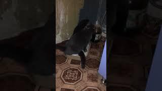 Кот и кошка сходили в туалет вдвоём,хотя у них разные туалеты и большие
