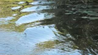 Pekka Streng ~ Takaisin virtaan (lyrics)