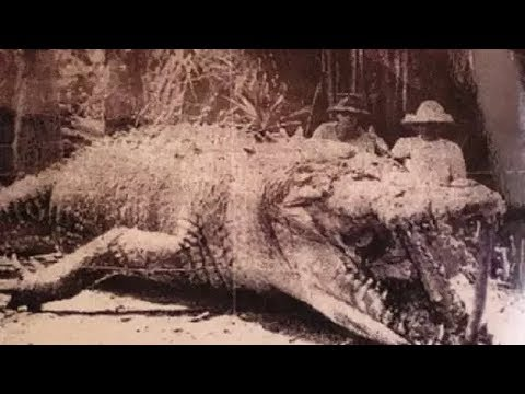 Top Biggest Crocodile Ever Caught