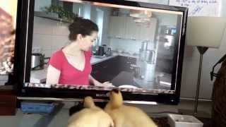 Do Your Pets Like To Watch Tv? Ducks As Pets: The Funny Moments