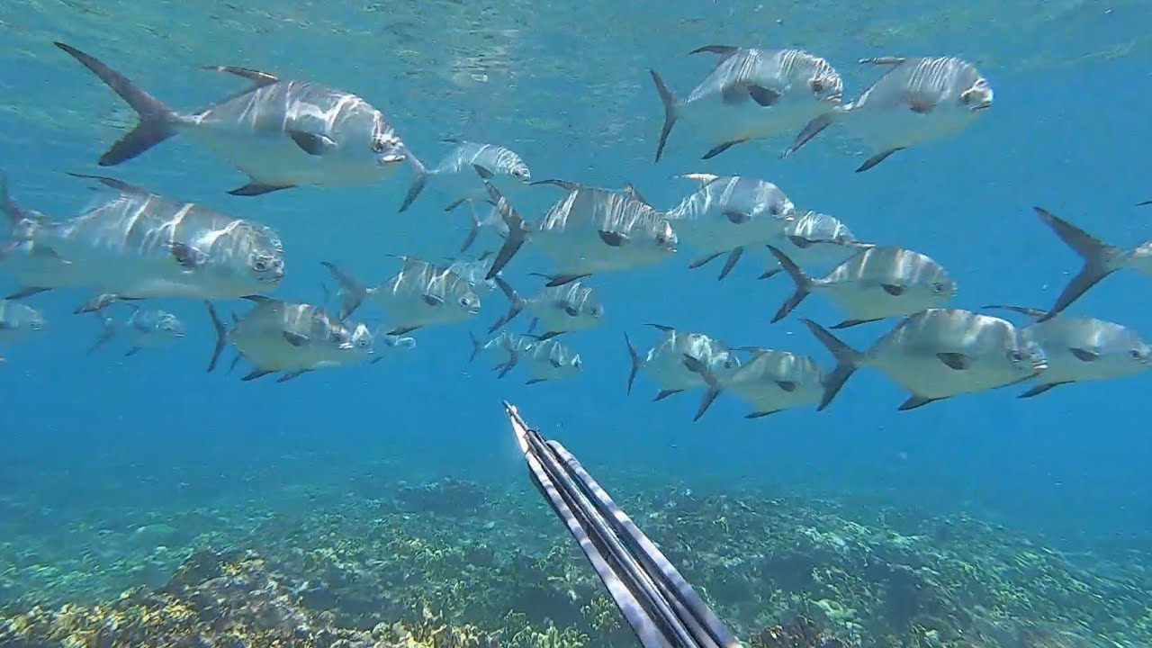 Ep. 303 Alone and spearfishing in Paradise - The Caribbean fishing adventure continues