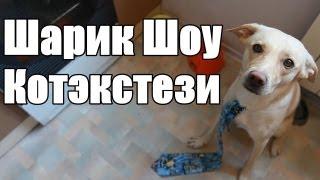Шарик Шоу - Котекстези (выпуск 43)