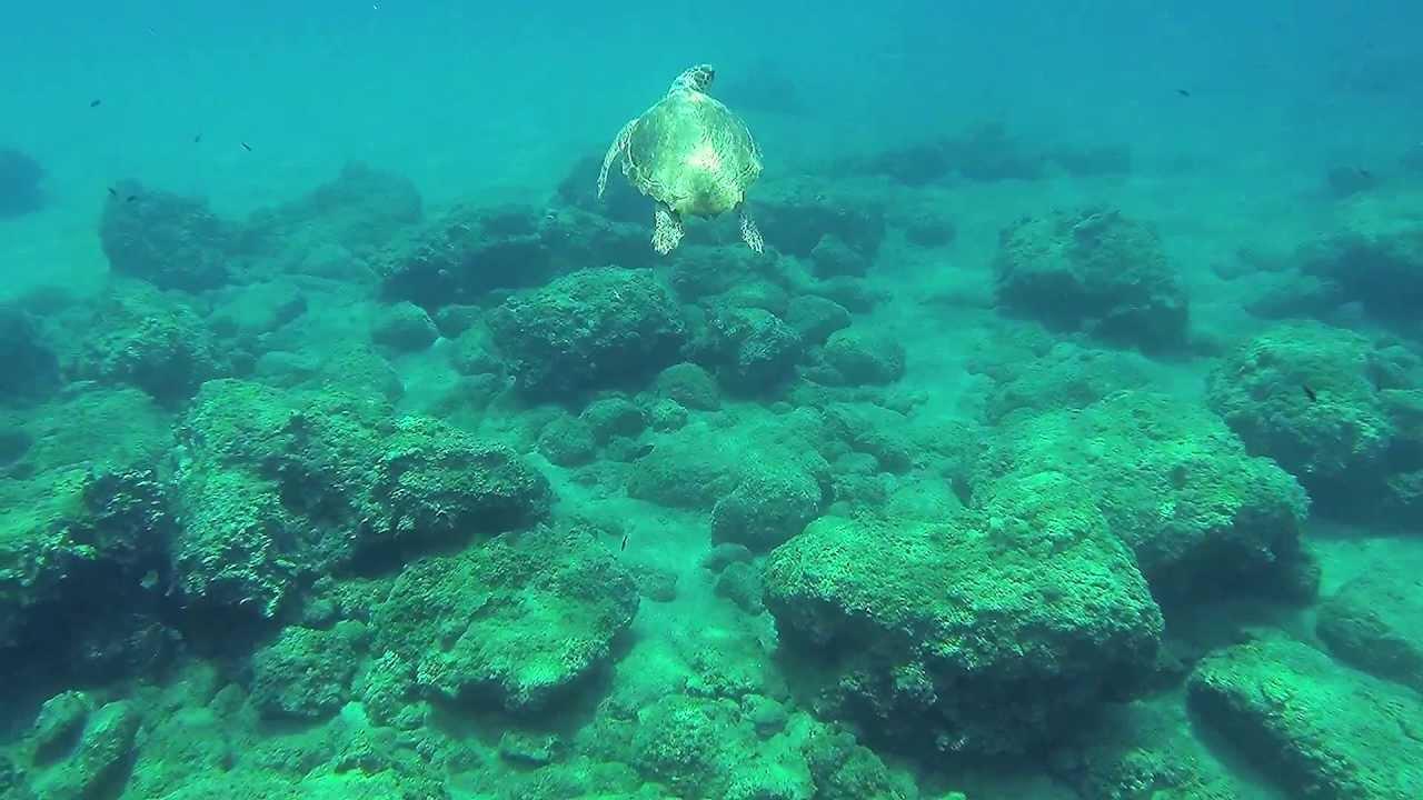 Snorkel Rhodes Island Greece