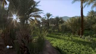 видео Мир бабочек. Охота на бабочек: с биноклем и фотоаппаратом