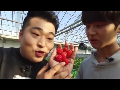 [170426] Strawberry Picking in Incheon with Pentagon - Tour Avatar FB Live
