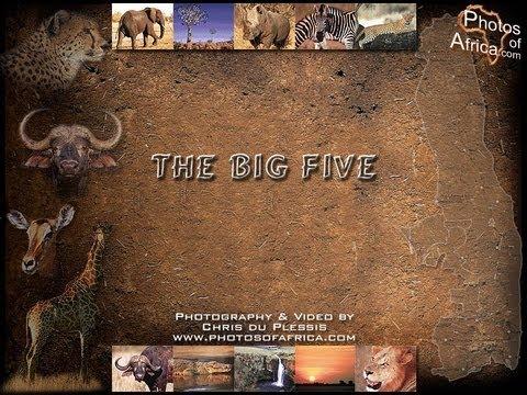 African Wildlife Photo Safari, The Big Five - Photos of Africa