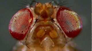 Spiders vs Flies - Organic Solution