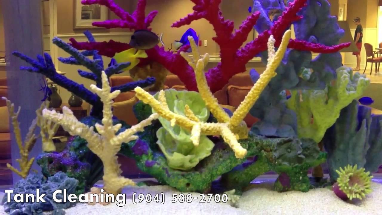Freshwater aquarium fish jacksonville fl - Best Fish Aquarium Company 904 588 2700 Jacksonville Florida