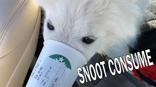 First Puppacino