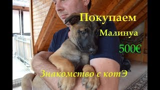 Бельгийская овчарка Малинуа за 500€ из германии , знакомство с котом