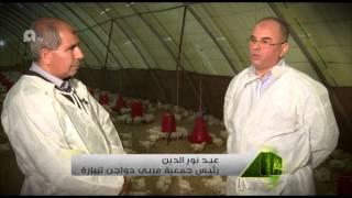الجزائر : الأخضر الدائم، انتاج اللحوم البيضاء و تربية الدواجن و الديك الرومي