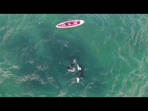 Orca and Kayaker Encounter Caught on Drone Video