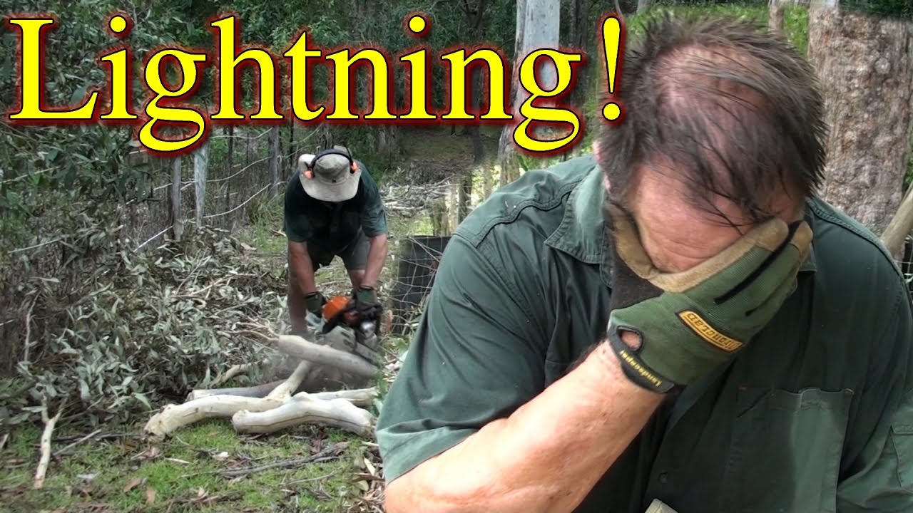 Vlog Lightning Strike Chainsawing Fix Chicken Free Range