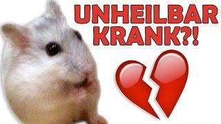 Mein Hamster ist krank ♥ Angeborene Krankheit durch schlechte Haltung?!(Schau doch einmal in die Beschreibung ♥ Instagram: http://instagram.com/miyukilps ♥ Facebook: https://www.facebook.com/#!/MiyukilPs ..., 2016-10-29T13:26:21.000Z)