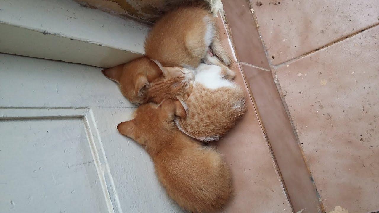 Cute Stray Kittens Taking Shelter From Rain Youtube