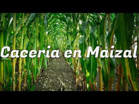 Caceria con rifle de aire comprimido