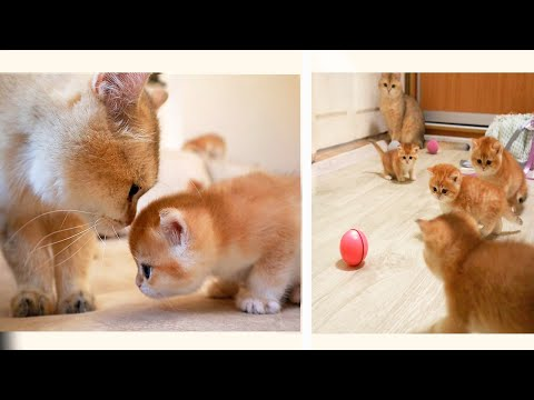 Grandfather Meets  His GrandKittens and plays football ⚽ with them