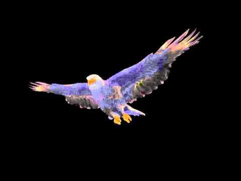 Орёл, парящий на чёрном фоне - Eagle