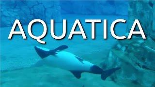 seaworld aquatica orlando water park 2016