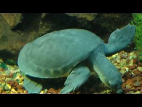Visiting Animals in Shedd Aquarium, Aquarium in Chicago, Illinois, United States