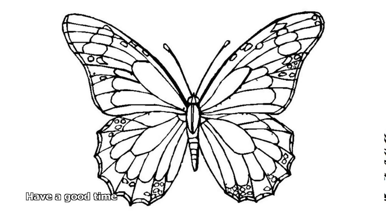 Butterfly coloring page symmetry - Butterfly Coloring Pages