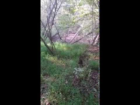 Four Days After TomorrowWorld Naked man Found in Creek