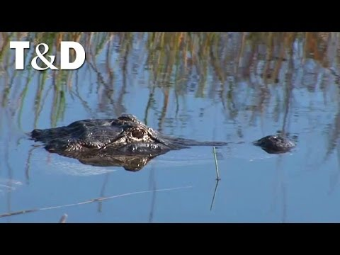 Parco Nazionale Delle Everglades - Florida