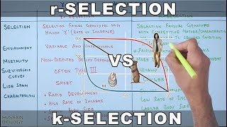 r-selection vs k-selection | r-strategists and k-strategists