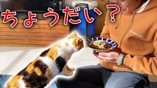 人間の食べ物に興味がない三毛猫が身を乗り出してきた